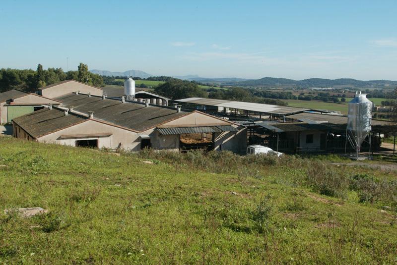 Foto 3 : <p>SEMEGA situa el seu bestiar bov&iacute; lleter entre els de m&eacute;s qualitat de l'Estat Espanyol</p>