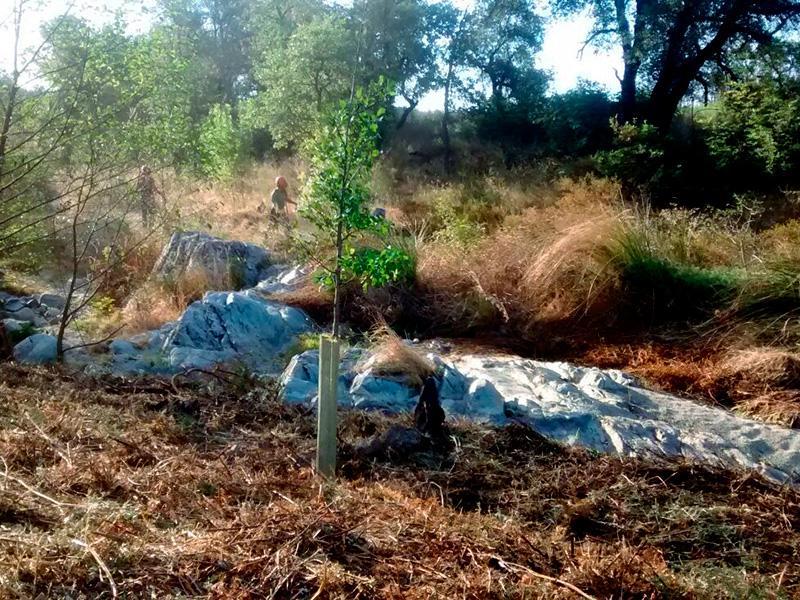 Foto 3 : <p>L&rsquo;Obra Social &ldquo;la Caixa&rdquo;, la Diputaci&oacute; de Girona i el Consorci Salines Bassegoda recuperen connectors ecol&ograve;gics&nbsp;</p>
