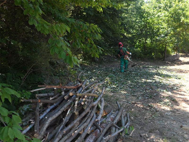 Foto 1 : <p>L&rsquo;Obra Social &ldquo;la Caixa&rdquo; i la Diputaci&oacute; de Girona recuperen prats de dall al Parc Natural del Montseny</p>