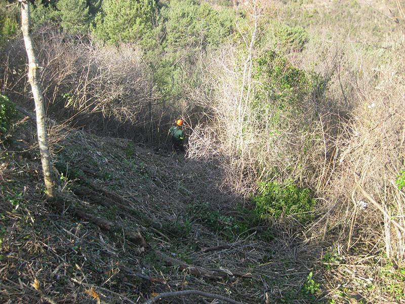 Foto 1 : <p>Recuperaci&oacute; d'espais oberts i millora de l&rsquo;h&agrave;bitat d&rsquo;alzinar a l'Alta Garrotxa</p>
