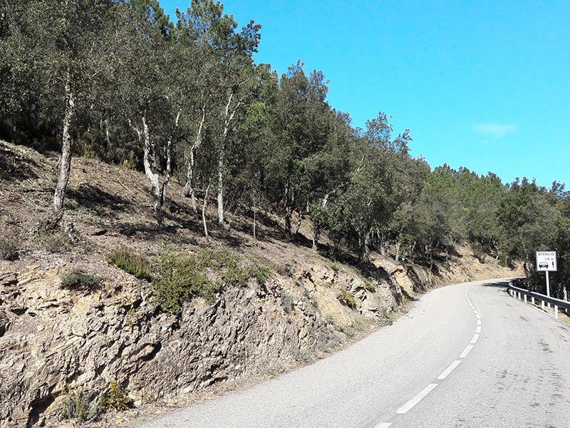 Foto 1 : <p>La Diputaci&oacute; de Girona crea un franja per a la prevenci&oacute; d'incendis al llarg de la carretera dels &Agrave;ngels</p>