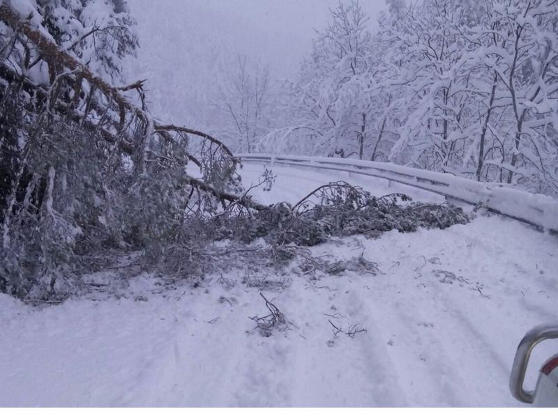 Foto 1 : Carretera GIV-4016 a Toses a l'abril passat