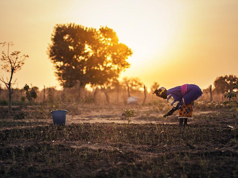 Foto 4: Dona treballant el planter de la seva parcel·la d'hort.