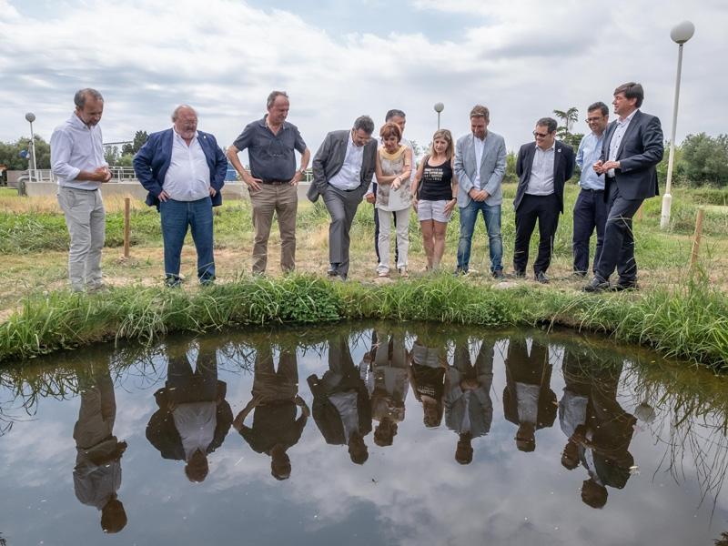 Foto 2 : La depuradora de Palau-saverdera impulsa un projecte pioner per afavorir la biodiversitat reforçant les poblacions d'amfibis i preservant l'únic nenúfar autòcton de Catalunya<br>