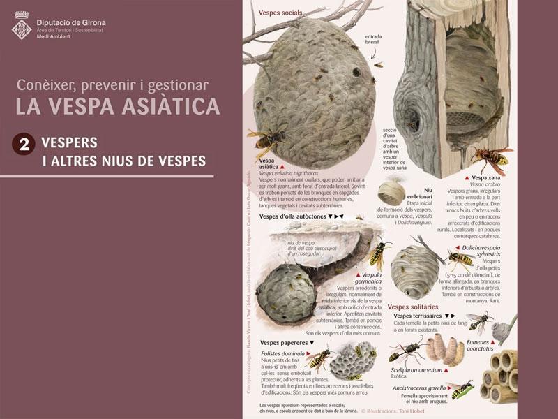 Foto : <p>La segona làmina sobre la vespa asiàtica ajuda a distingir-ne els nius</p>