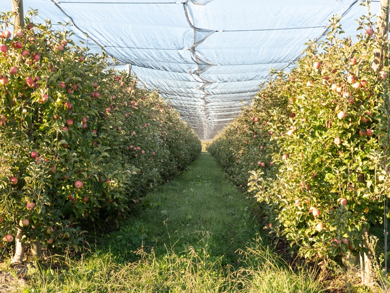 Foto : La Diputació impulsa un nou projecte PECT per enfortir el sector alimentari de la demarcació i fer-lo més sostenible<