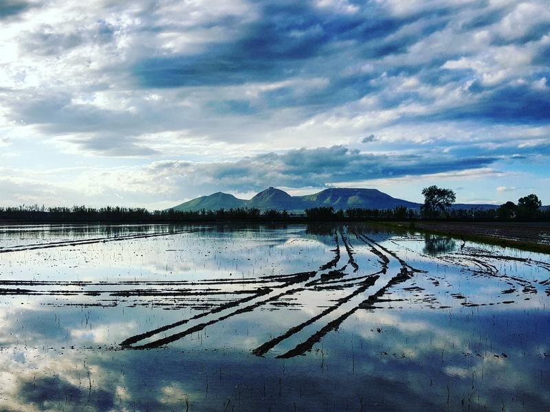 Foto : Pla d'actuacions per controlar la inundabilitat a la conca del rec Vell - Ter Vell, a Torroella de Montgrí - l'Estart
